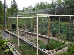 chicken wire fence ideas. Chicken Wire Fence Ideas Fencing Over The Frame And Used Staples To Chicken Wire Fence Ideas