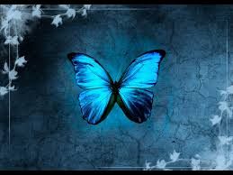 Pic blue morpho butterfly wallpapers