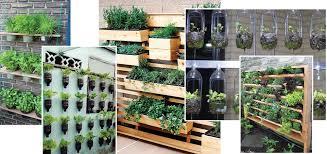 how to grow an urban vegetable garden