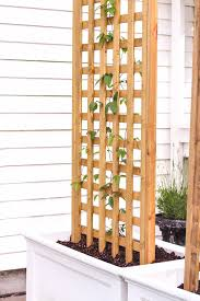 learn how to make this gorgeous trellis planter for your garden or patio perfect for