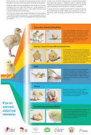 Chicken Disease Chart National Farm Animal Care Council Poultry Code Of Practice