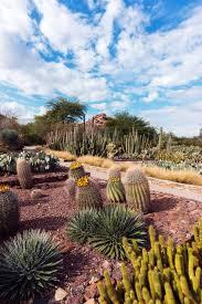 views from ottosen entry garden at desert botanical garden