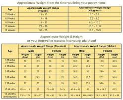 Rottweiler Size And Weight Chart Rottweiler Growth Chart Know What To Expect As Your Rottie