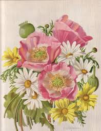 Vintage Floral Print Free Download Vintage Floral Print Dogwood Flowers 30s 40s Era