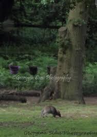 Georgina Sims Photography - Photos   Facebook