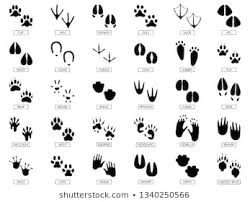 Royalty Free Animal Footprints Stock Images Photos