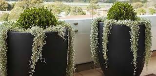 garden pots cheap. Designer-Garden-Pots-for-Balcony Garden Pots Cheap