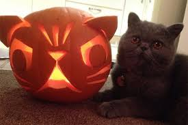 Image result for images pets and halloween