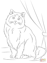 Small Picture Ragdoll Cat coloring page Free Printable Coloring Pages