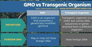 And virus resistant squash and papaya. Difference Between Gmo And Transgenic Organism Compare The Difference Between Similar Terms