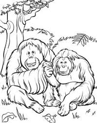 Small Picture Zoo Coloring Pages For Preschoolers Zoo Animals Coloring Picture