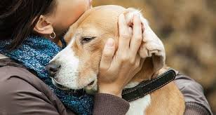 ways to euthanize your dog at home