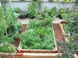 raised garden beds for edmonton