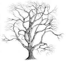 best 10 oak trees for sale ideas on pinterest old oak tree House Plants For Sale botanical drawings for sale buy original botanical drawings house plants for sale online