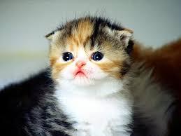 cute cat wallpapers qo39v32 1024x768 px