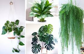 best indoor plants for office. Best Houseplants For Purifying Air New Indoor How To Care Each 11 Display Plants Office