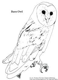Free Printable Owl Coloring Pages Snowy Owl Coloring Page Barn Owl