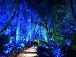 Enchanted Forest Of Lights Descanso Into The Woods Enchanted At Descanso La Weekly