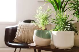 feng shui. A Feng Shui Healer Spills The Essentials That Should Be In Your Living Room