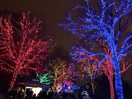 Colorful Trees At Zoo Lights Holiday Display At National