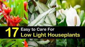 House Plants Low Light Requirements 17 Houseplants That Dont Need Much Light