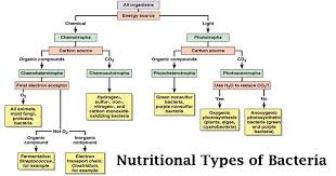 Bacteria Classification Classification Of Bacteria On The Basis Of Nutrition Basic