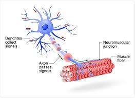 motor neuron disease can tary