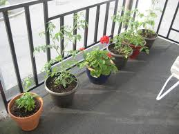 balcony garden 012