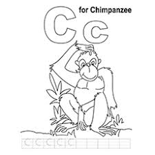 Small Picture 10 Free Printable Lovely Chimpanzee Coloring Pages Online
