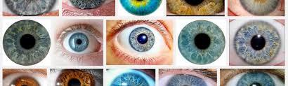 Structural Eye Color Is Amazing Paul Van Slembrouck Medium