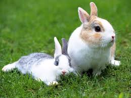 cute white rabbits wallpapers. beautiful rabbit wallpapers cute white rabbits