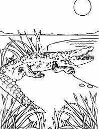 Simple Crocodile Color Page