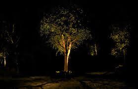 tree lighting ideas. Plain Decoration Landscape Tree Lighting Tasty San Diego Design Ideas N
