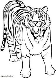 Small Picture Coloring Page Tiger animal coloring pages 18 coloring for