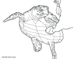 Baby Sea Turtle Coloring Pages At Getdrawingscom Free For