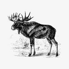 <b>Scandinavian Elk</b> Free Vector Art - (8 Free Downloads)