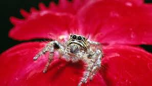 Species Of Spiders In Washington State Animals Mom Me
