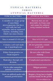 What is the Difference Between Typical ...