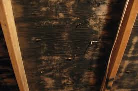 mold in attic. Contemporary Attic Black Mold Growing On Attic Rafters In N