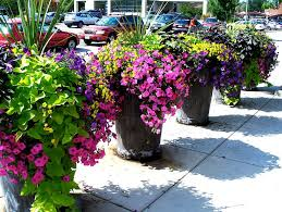 Best 25 Outdoor Potted Plants Ideas On Pinterest  Potted Plants Container Garden Plans Flowers
