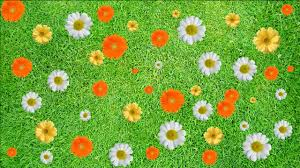 grass and flowers background. Contemporary Flowers Buy Color Flower Background Intended Grass And Flowers Background C