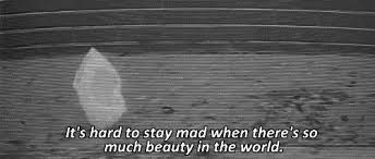 American Beauty Quotes Best of GIF Movie Movies Black And White Animated GIF On GIFER By Drelawield