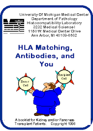 Hla Matching Antibodies And You