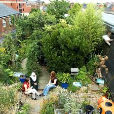 urban rooftop vegetable garden