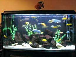 furniture for fish tank. Fish Tank Furniture Photo 2 Of Perfect Fancy  Tanks Best . For