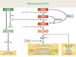 36 Specific Renin Angiotensin System Pathway