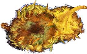 sunflowers common sunflower oil painting painting sunflower