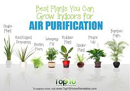 Best Indoors Plants 10 Best Plants You Can Grow Indoors For Air  Purification Top 10
