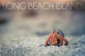 Crab Size Chart Nj