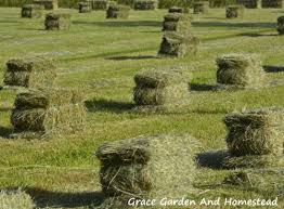 what are the advanes and disadvanes in shapes and sizes of bales article addresses 6
